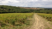 Vignes Sainte Colombe