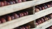 Plateaux prunes
